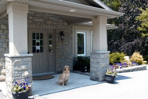 Classy Canines - Ancaster