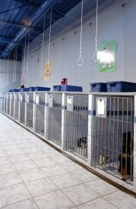 Holly's Pride -cat kennels