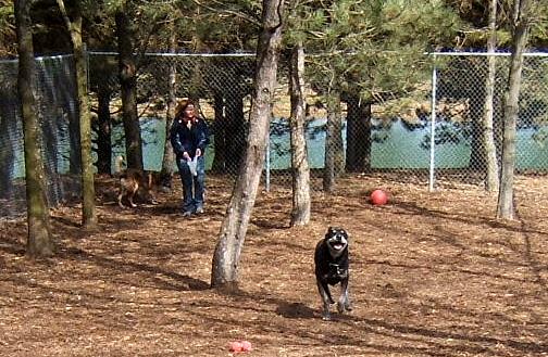dug running and playing