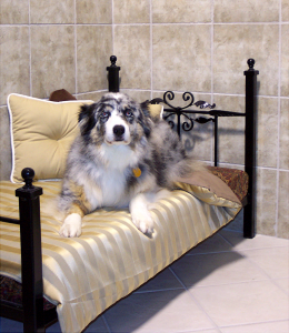 Beautiful dog relaxing at Ancaster Hotel for Pets