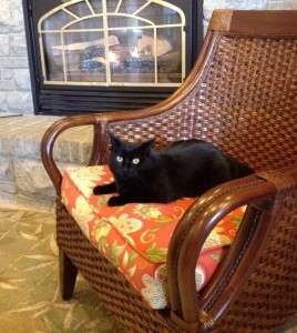 Black cat near fireplace