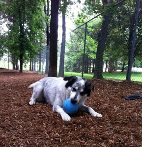 dog chewing a ball - Classy Canines