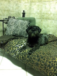 relaxed dog on safari bed - Holly's Pride