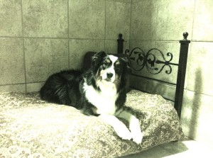 Classy Canines - dog on bed
