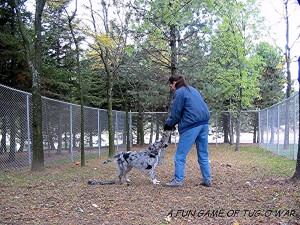 Dog playing at Holly's Pride Ancaster