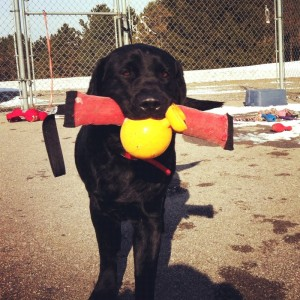 dog's mouth full of toys