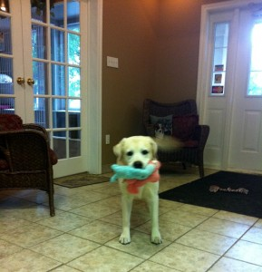 dog with his toys - Classy Canines
