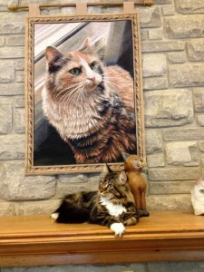 perfect cat picture - Holly's Pride