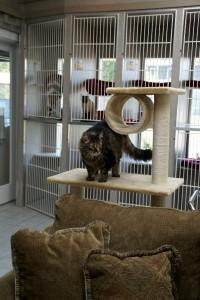 cat playground - Kool Kat
